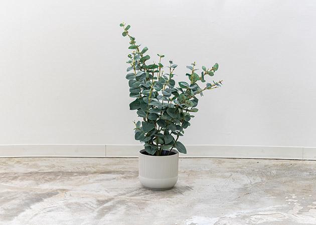 大阪のレンタルフォトスタジオ「UTSUBO STUDIO 3」の人工観葉植物A