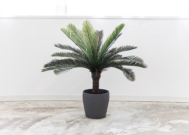 大阪のレンタルフォトスタジオ「UTSUBO STUDIO 3」の人工観葉植物B