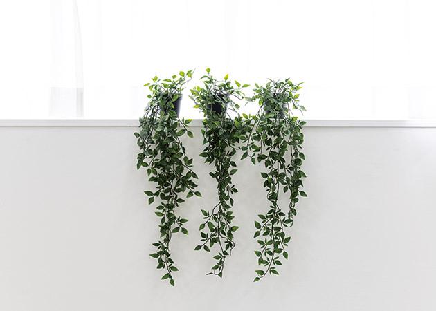 大阪のレンタルフォトスタジオ「UTSUBO STUDIO 3」の人工観葉植物D 3種