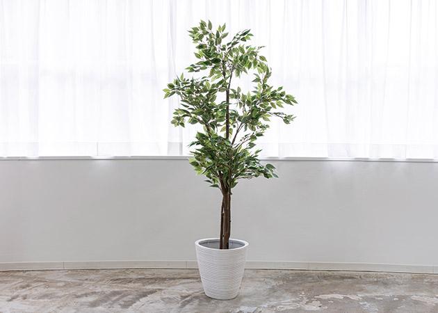 大阪のレンタルフォトスタジオ「UTSUBO STUDIO 3」の人工観葉植物C